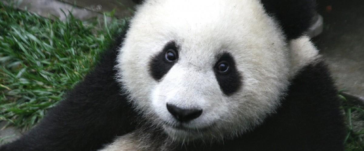 Google Panda e la SERP
