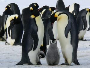 google-penguin-gsite